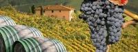 Сыро - винный  тур по Закарпатью